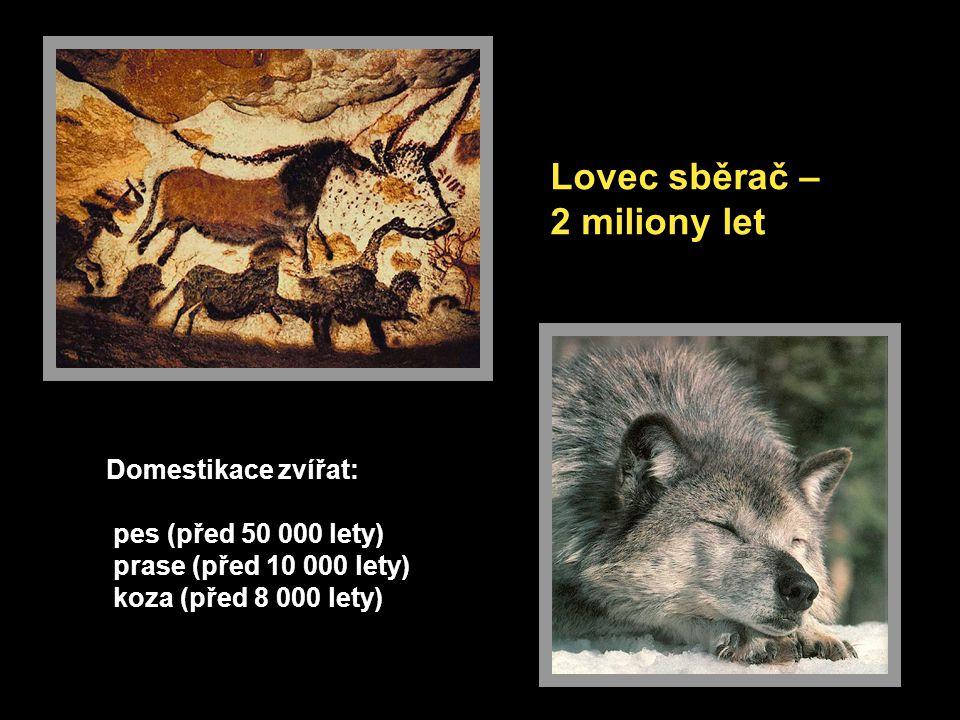 Lovec sběrač – 2 miliony let Domestikace zvířat: pes (před 50 000 lety) prase (před 10 000 lety) koza (před 8 000 lety)