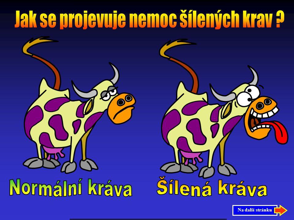 Zase je tu nemoc šílených krav Lidé blázní a mnozí jsou neprávem nařčeni, že ji mají. Mnoho lidí si myslí že nemoc šílených krav mohou mít pouze ženy,