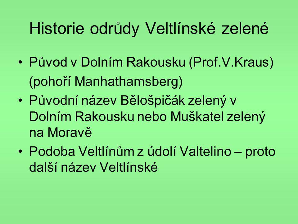 Historie odrůdy Veltlínské zelené •Původ v Dolním Rakousku (Prof.V.Kraus) (pohoří Manhathamsberg) •Původní název Bělošpičák zelený v Dolním Rakousku n