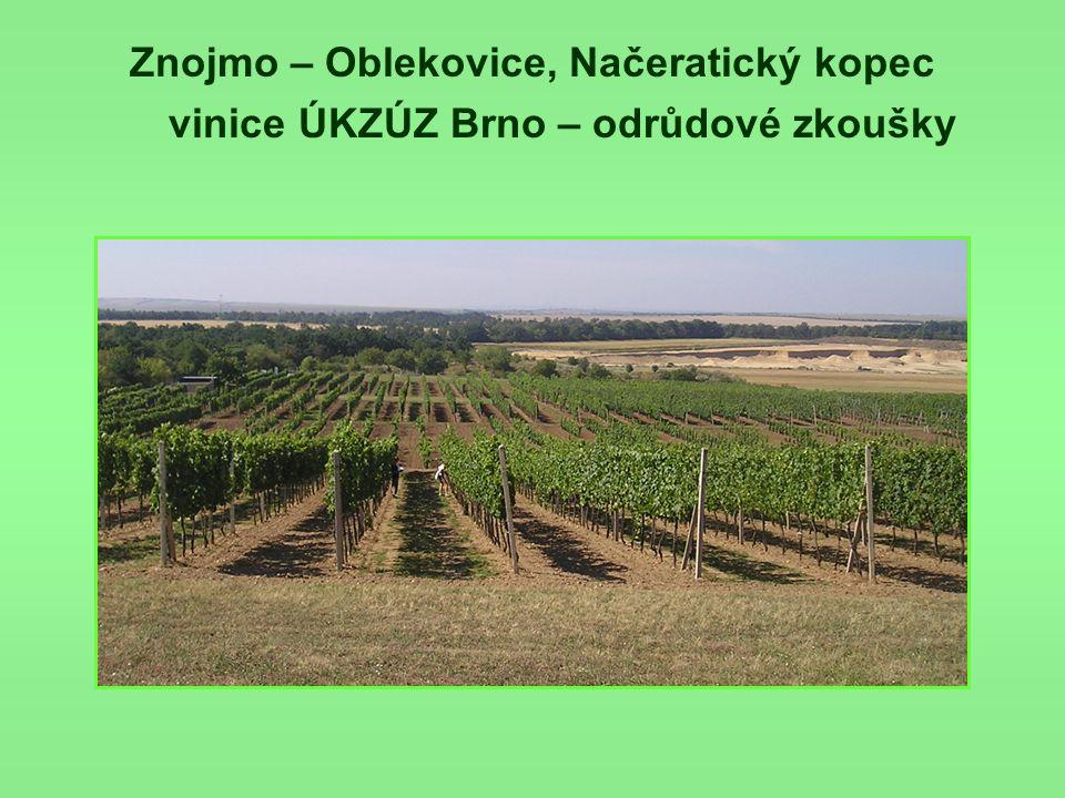 Znojmo – Oblekovice, Načeratický kopec vinice ÚKZÚZ Brno – odrůdové zkoušky