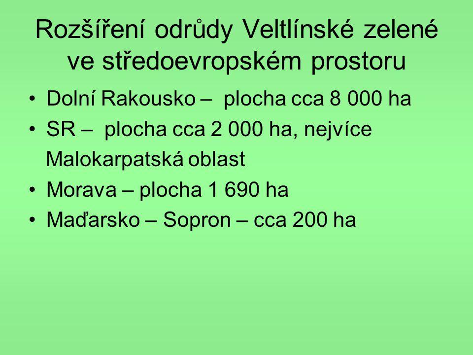 Rozšíření odrůdy Veltlínské zelené ve středoevropském prostoru •Dolní Rakousko – plocha cca 8 000 ha •SR – plocha cca 2 000 ha, nejvíce Malokarpatská