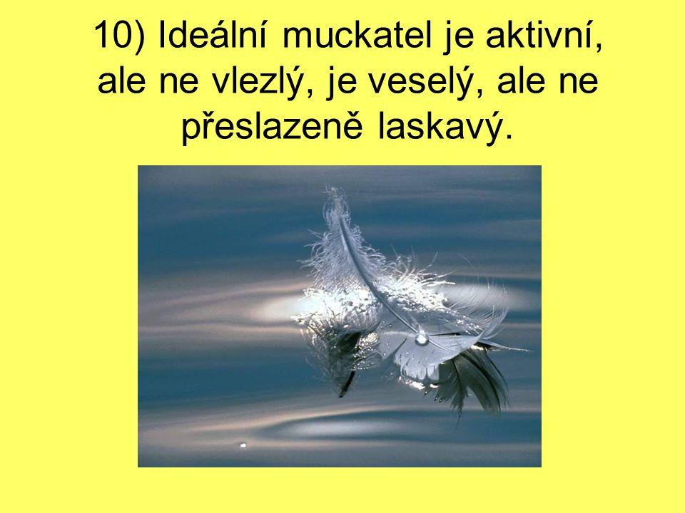 10) Ideální muckatel je aktivní, ale ne vlezlý, je veselý, ale ne přeslazeně laskavý.