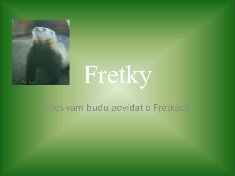 Předmluva • Fretka je pěkné a oblíbené domácí zvířátko, je ovšem nutno se s ní naučit správně zacházet.