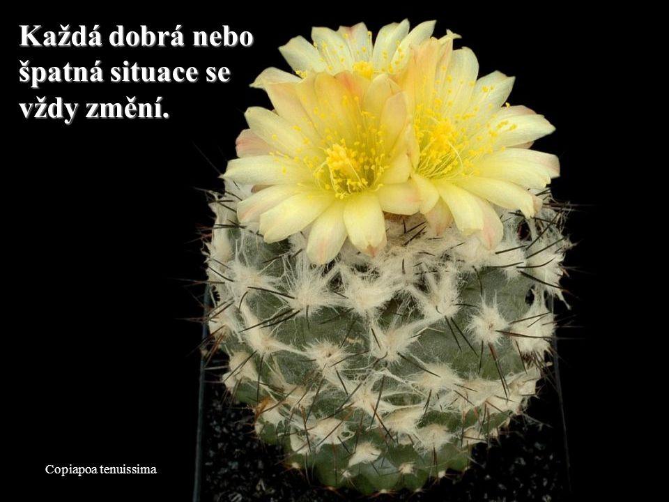 Mammillaria slevinii To, co si ostatní lidé myslí o tobě, není nicpro tebe. To, co si ostatní lidé myslí o tobě, není nic pro tebe.