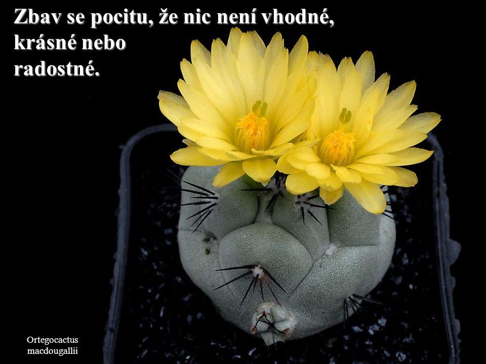 Copiapoa tenuissima Každá dobrá nebo špatná situace se vždy změní.