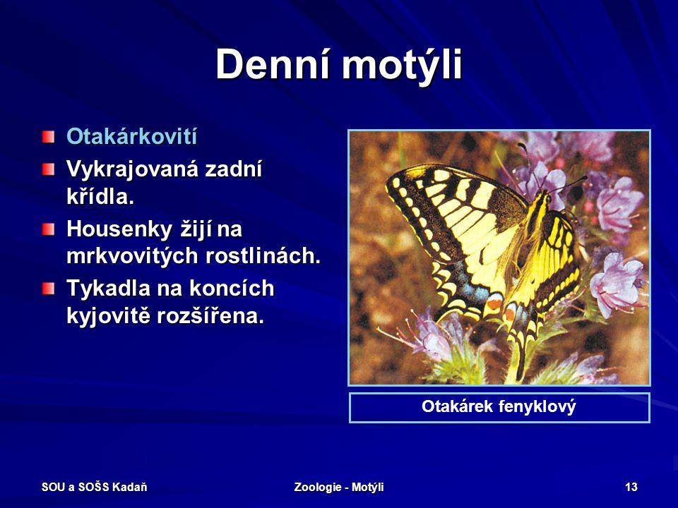SOU a SOŠS Kadaň Zoologie - Motýli 12 Noční motýli - můry Bekyně mniška Bekyně zlatořitná Bourovec prstenčivý Bourec morušový Osenice polní Můra gama