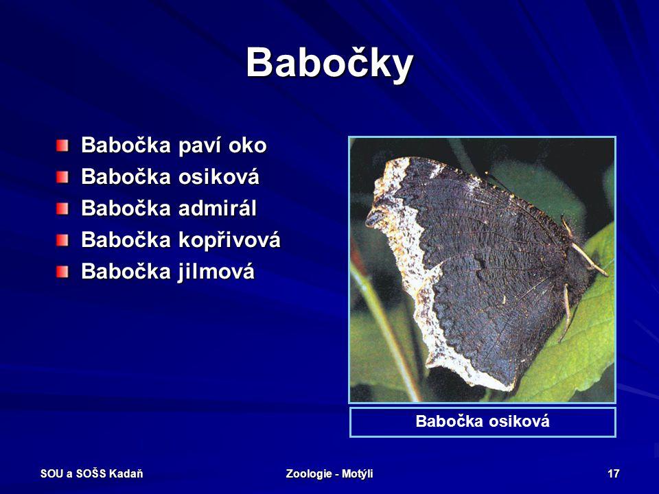 SOU a SOŠS Kadaň Zoologie - Motýli 16 Otakárkovití – Pestrokřídlec podražcový