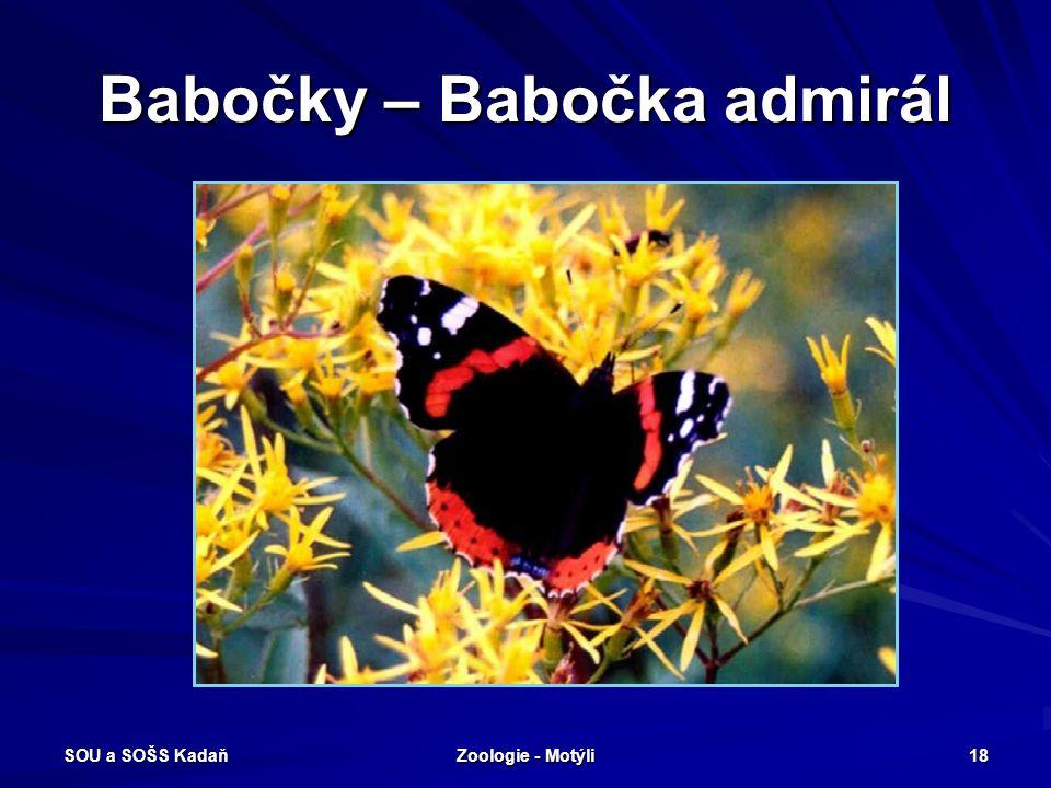 SOU a SOŠS Kadaň Zoologie - Motýli 17 Babočky Babočka paví oko Babočka osiková Babočka admirál Babočka kopřivová Babočka jilmová Babočka osiková