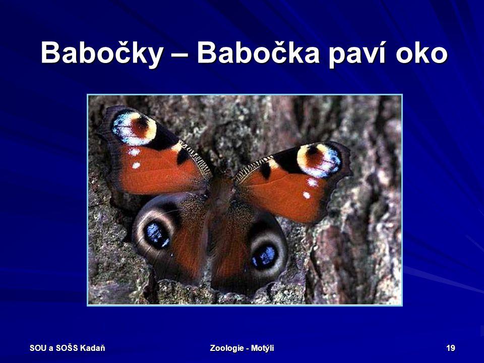 SOU a SOŠS Kadaň Zoologie - Motýli 18 Babočky – Babočka admirál