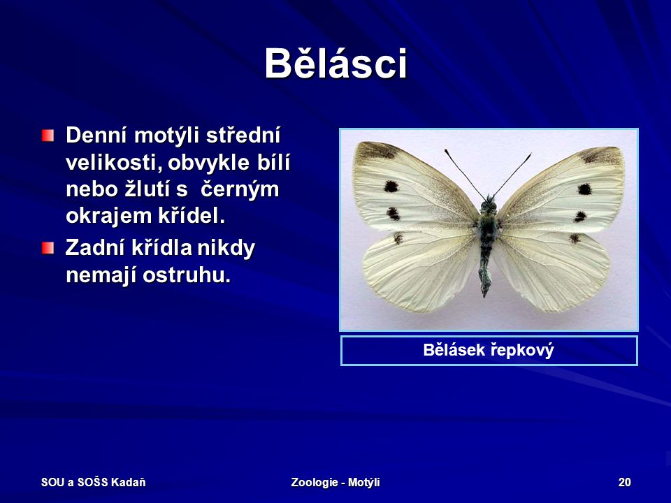 SOU a SOŠS Kadaň Zoologie - Motýli 19 Babočky – Babočka paví oko