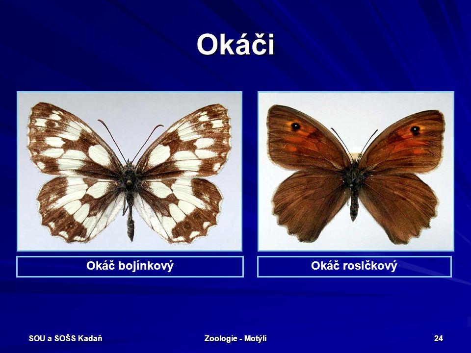 SOU a SOŠS Kadaň Zoologie - Motýli 23 Modrásci Malí až středně velcí, denní motýli, často svrchu kovově modře zbarvení. Nohy kráčivé, ale samci mají p