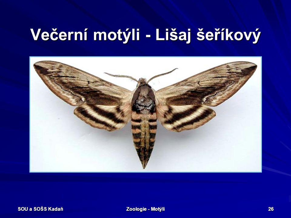 SOU a SOŠS Kadaň Zoologie - Motýli 25 Večerní motýli – Lišaj smrtihlav