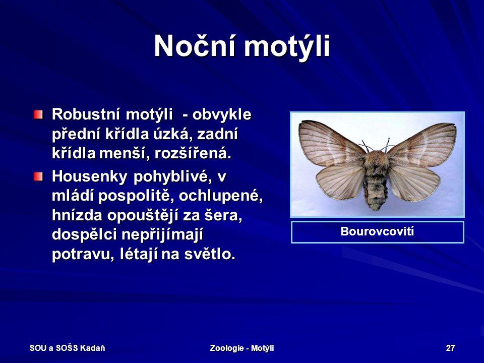 SOU a SOŠS Kadaň Zoologie - Motýli 26 Večerní motýli - Lišaj šeříkový