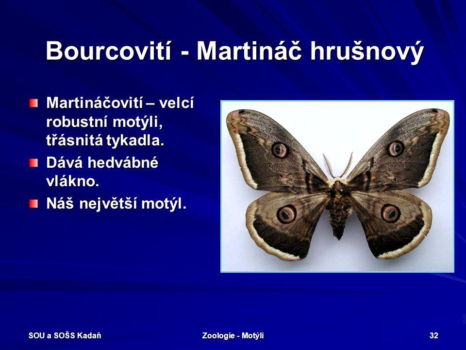 SOU a SOŠS Kadaň Zoologie - Motýli 31 Bourcovití - Bourec morušový
