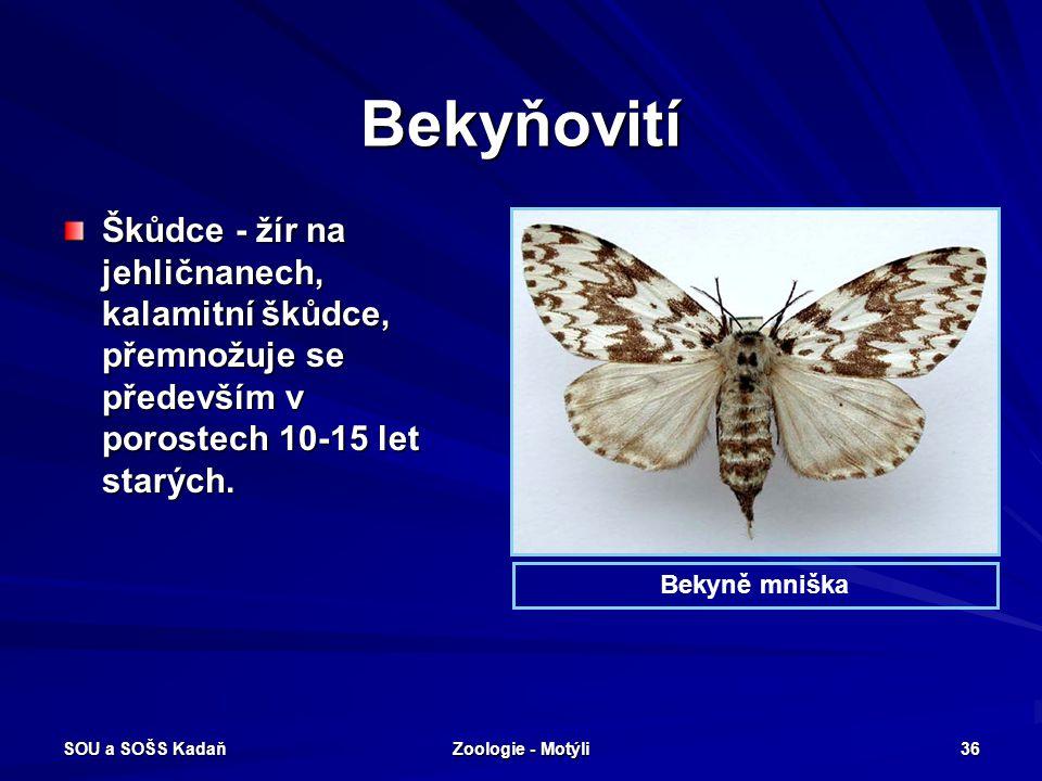 SOU a SOŠS Kadaň Zoologie - Motýli 35 Můrovití – Stužkonoska modrá