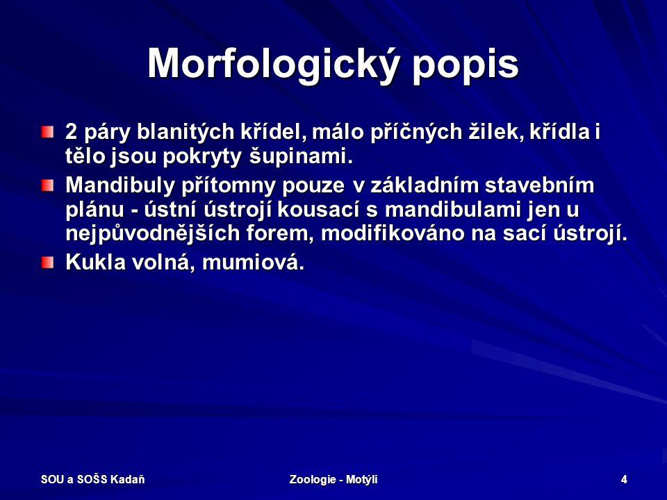 SOU a SOŠS Kadaň Zoologie - Motýli 4 Morfologický popis 2 páry blanitých křídel, málo příčných žilek, křídla i tělo jsou pokryty šupinami.