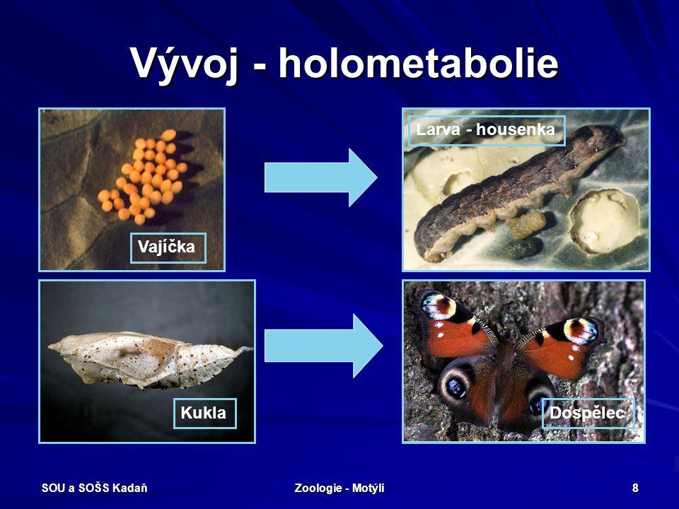 SOU a SOŠS Kadaň Zoologie - Motýli 8 Vývoj - holometabolie Vajíčka Larva - housenka KuklaDospělec