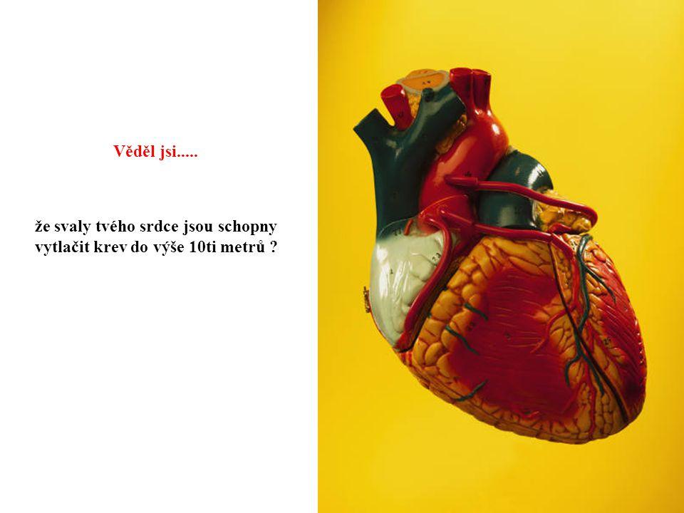 že svaly tvého srdce jsou schopny vytlačit krev do výše 10ti metrů ? Věděl jsi.....