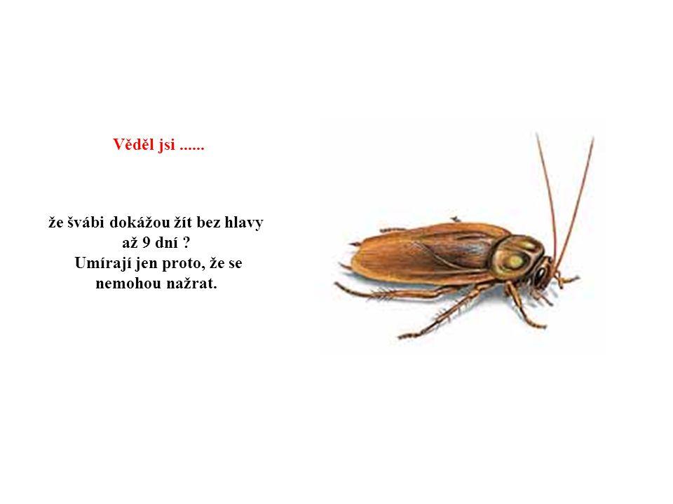 že motýli mají chuťové buňky na nohách Věděl jsi......