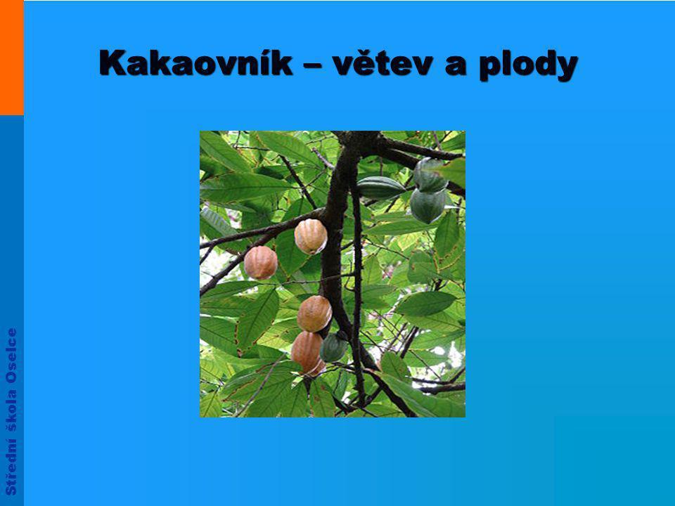 Střední škola Oselce Kakaovník – větev a plody