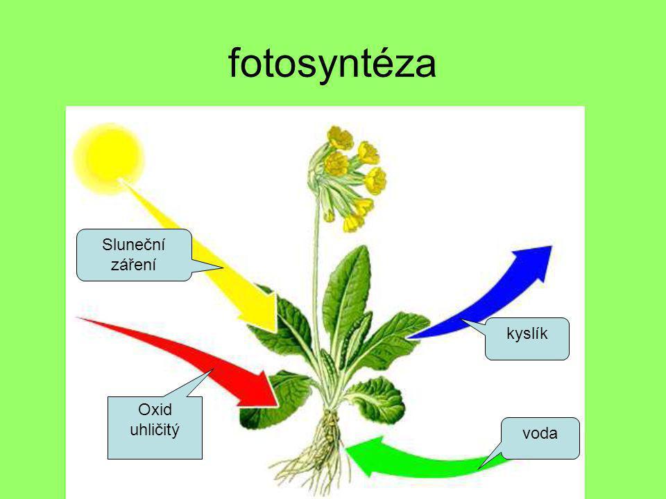 fotosyntéza Oxid uhličitý voda kyslík Sluneční záření
