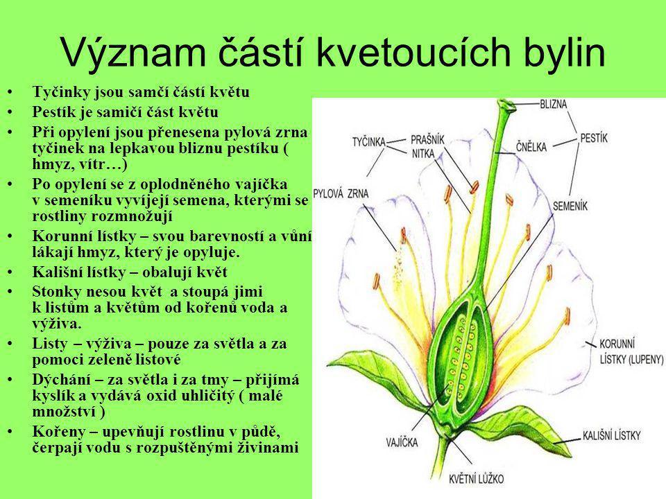 Význam částí kvetoucích bylin •Tyčinky jsou samčí částí květu •Pestík je samičí část květu •Při opylení jsou přenesena pylová zrna tyčinek na lepkavou