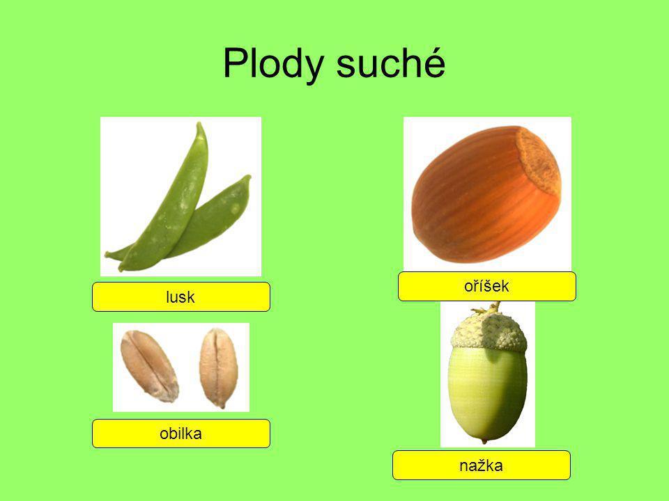 Plody suché lusk oříšek obilka nažka