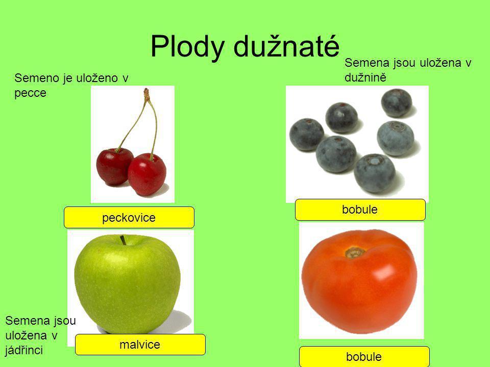 Plody dužnaté peckovice bobule malvice bobule Semeno je uloženo v pecce Semena jsou uložena v jádřinci Semena jsou uložena v dužnině