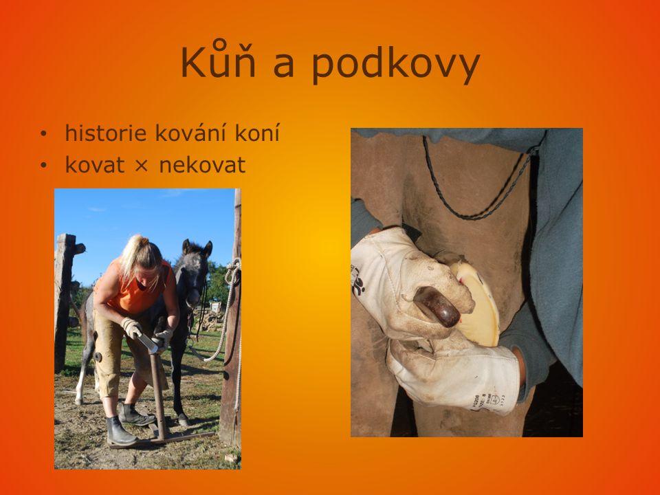 2.ustájení a práce s koněm podle typu koně a jeho práce komerční charakter práce s koněm