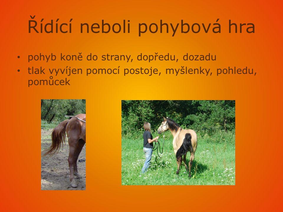 Řídící neboli pohybová hra • pohyb koně do strany, dopředu, dozadu • tlak vyvíjen pomocí postoje, myšlenky, pohledu, pomůcek