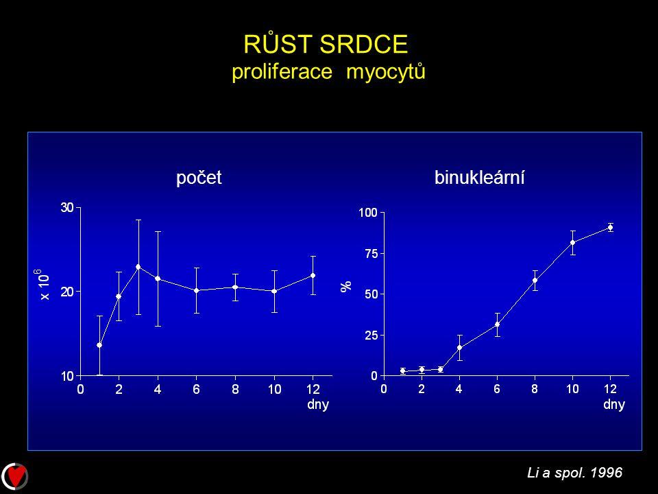 RŮST SRDCE proliferace myocytů početbinukleární Li a spol. 1996