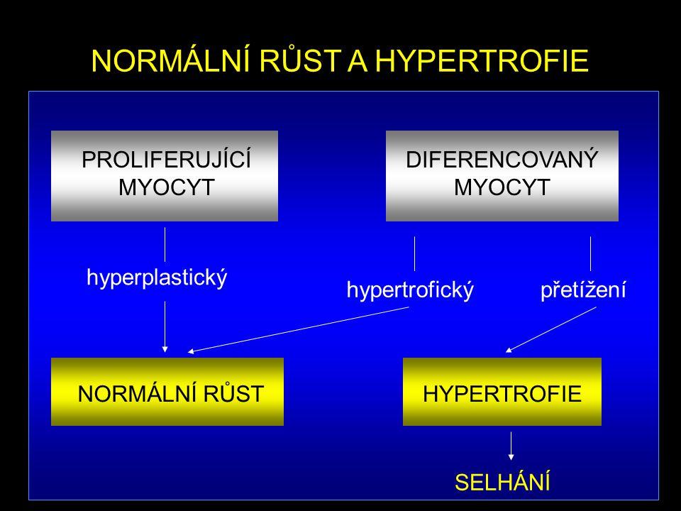 NORMÁLNÍ RŮST A HYPERTROFIE NORMÁLNÍ RŮST HYPERTROFIE SELHÁNÍ hyperplastický hypertrofickýpřetížení DIFERENCOVANÝ MYOCYT PROLIFERUJÍCÍ MYOCYT