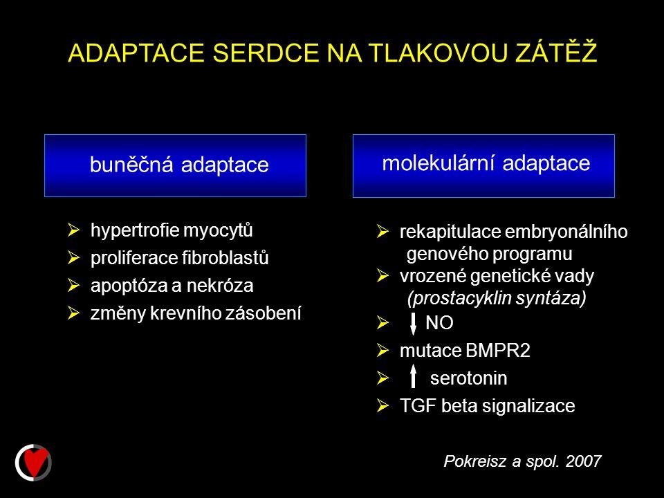 rekapitulace embryonálního genového programu  vrozené genetické vady (prostacyklin syntáza)  NO  mutace BMPR2  serotonin  TGF beta signalizace ADAPTACE SERDCE NA TLAKOVOU ZÁTĚŽ buněčná adaptace  hypertrofie myocytů  proliferace fibroblastů  apoptóza a nekróza  změny krevního zásobení molekulární adaptace Pokreisz a spol.