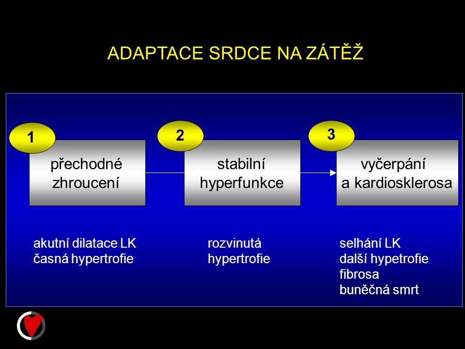 ADAPTACE SRDCE NA ZÁTĚŽ přechodné zhroucení stabilní hyperfunkce vyčerpání a kardiosklerosa 1 2 3 akutní dilatace LK časná hypertrofie rozvinutá hypertrofie selhání LK další hypetrofie fibrosa buněčná smrt