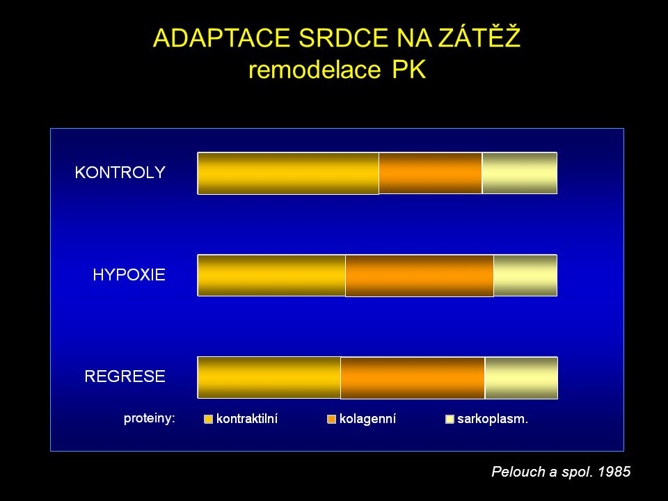 ADAPTACE SRDCE NA ZÁTĚŽ remodelace PK proteiny: Pelouch a spol. 1985