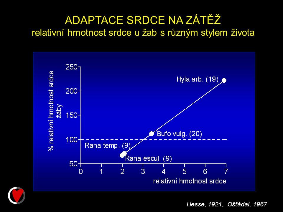ADAPTACE SRDCE NA ZÁTĚŽ relativní hmotnost srdce u žab s různým stylem života Hesse, 1921, Ošťádal, 1967