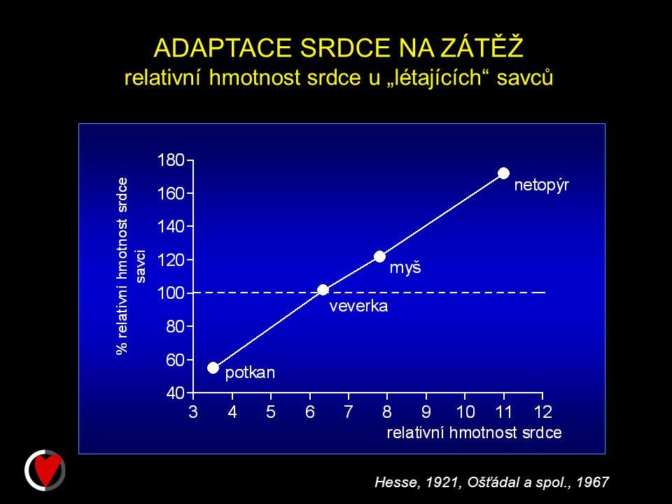 """ADAPTACE SRDCE NA ZÁTĚŽ relativní hmotnost srdce u """"létajících savců Hesse, 1921, Ošťádal a spol., 1967"""