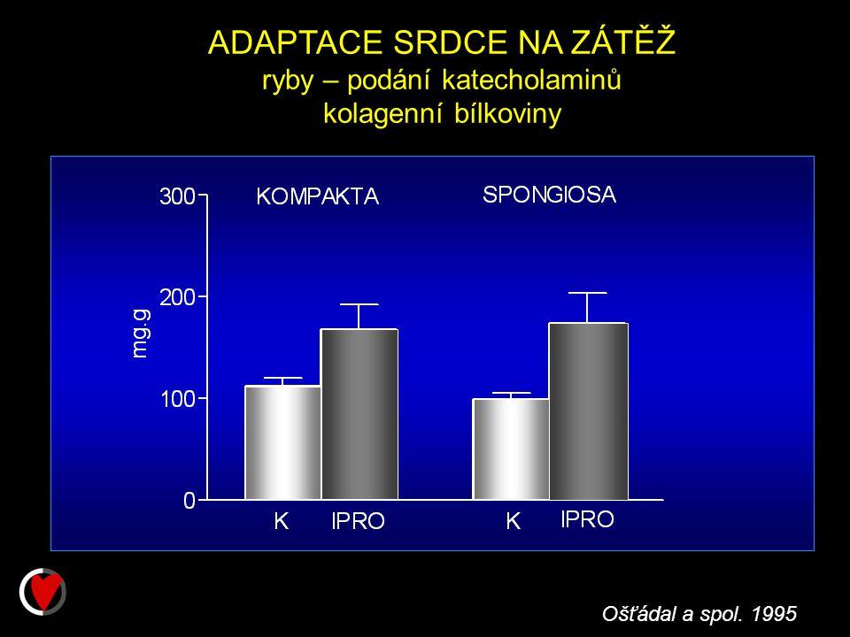 Ošťádal a spol. 1995 ADAPTACE SRDCE NA ZÁTĚŽ ryby – podání katecholaminů kolagenní bílkoviny