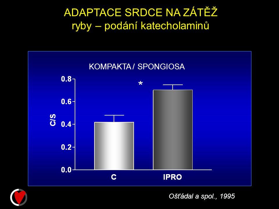 ADAPTACE SRDCE NA ZÁTĚŽ ryby – podání katecholaminů KOMPAKTA / SPONGIOSA Ošťádal a spol., 1995