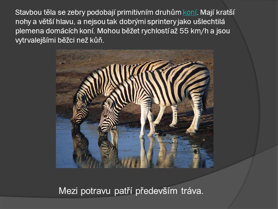 Přijde zebra k fotografovi. Fotograf se ptá: A fotečky bude te chtít černobílé nebo barevné?