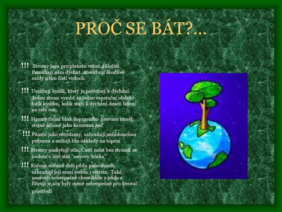 PROČ SE BÁT?...!!. Stromy jsou pro planetu velmi důležité.