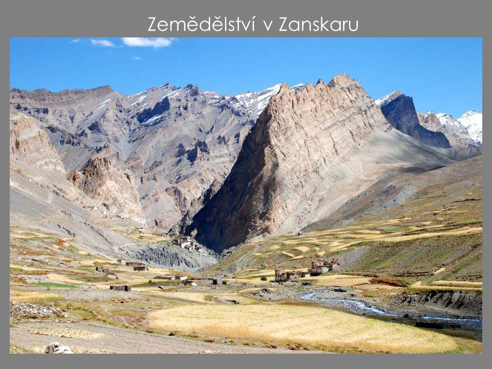 Zemědělství v Zanskaru