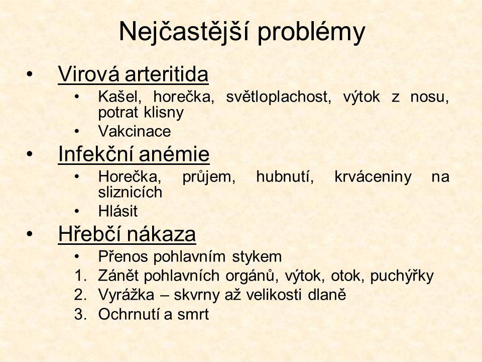 Nejčastější problémy •Virová arteritida •Kašel, horečka, světloplachost, výtok z nosu, potrat klisny •Vakcinace •Infekční anémie •Horečka, průjem, hubnutí, krváceniny na sliznicích •Hlásit •Hřebčí nákaza •Přenos pohlavním stykem 1.Zánět pohlavních orgánů, výtok, otok, puchýřky 2.Vyrážka – skvrny až velikosti dlaně 3.Ochrnutí a smrt
