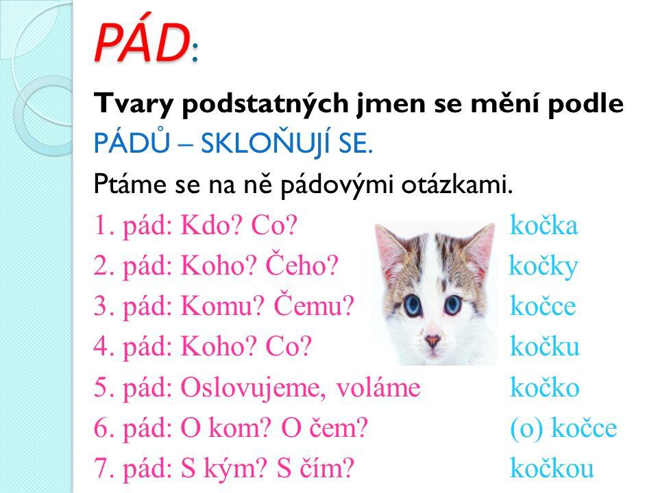 PÁD : Tvary podstatných jmen se mění podle PÁDŮ – SKLOŇUJÍ SE. Ptáme se na ně pádovými otázkami. 1. pád: Kdo? Co? kočka 2. pád: Koho? Čeho? kočky 3. p