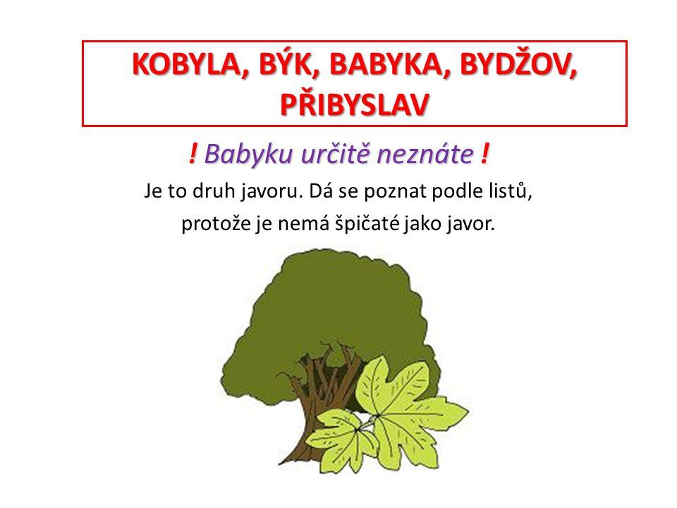 Vyplň • bab__ka je strom (druh javoru) • nový náb__tek byl velmi levný Zb__šek • stan je plátěný příb__tek • B__džov je město, nebo vesnice.