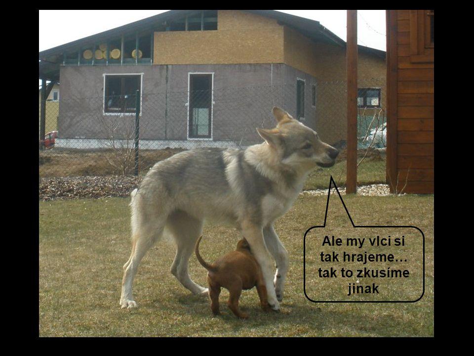 Ale my vlci si tak hrajeme… tak to zkusíme jinak