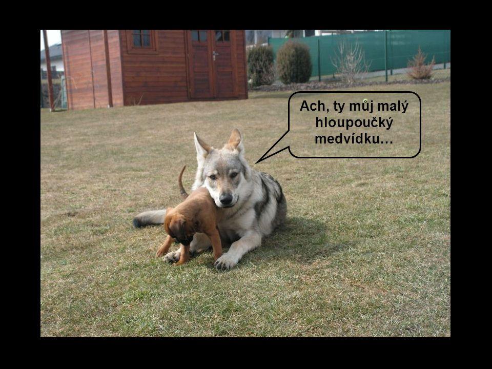 Ach, ty můj malý hloupoučký medvídku…