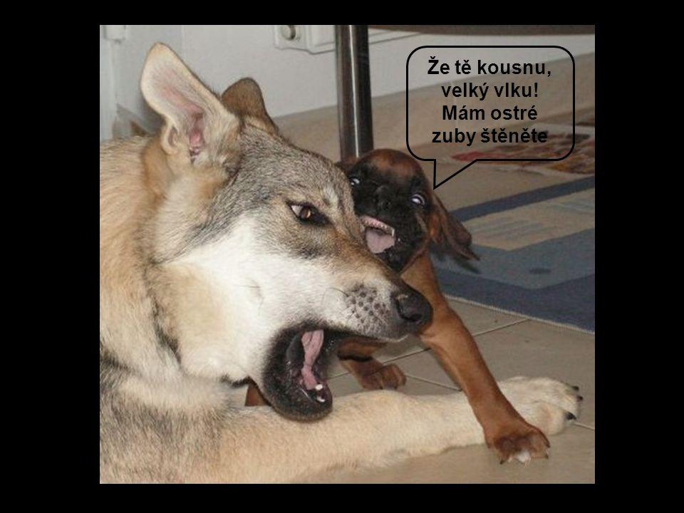 Že tě kousnu, velký vlku! Mám ostré zuby štěněte
