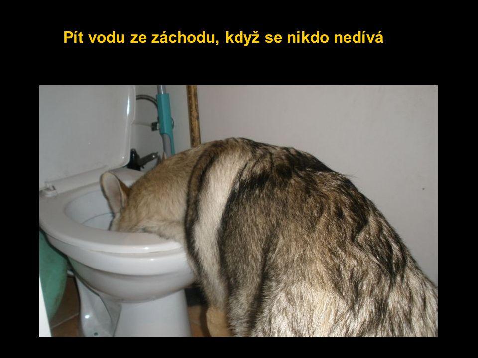 Pít vodu ze záchodu, když se nikdo nedívá