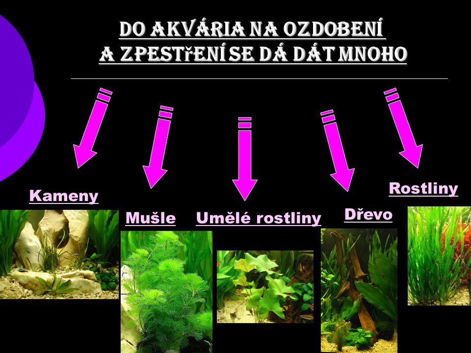 Do akvária na ozdobení a zpest ř ení se dá dát mnoho Kameny MušleUmělé rostliny Rostliny Dřevo